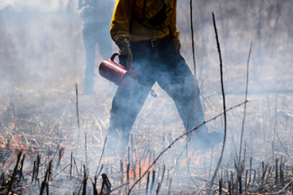 Person using a drip-torch at the UW-Madison Arboretum