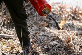 photo of person a drip torch at the UW Arboretum