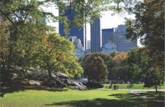 photograph of central park in nyc