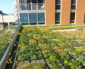 prairie plants on roof of apartment building